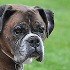 Tyson at 10 by Marlene Piccolin