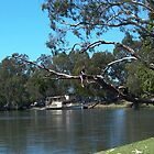 Murray River, lovely day, Albury by BronReid