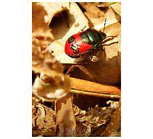 Beetlejuice Photographic Print