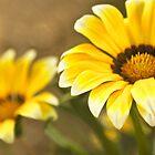 Yellow Blooms by Leslie  Hagen