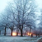 Frosty lights  by redstripes