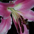 Pink Lily by Geraldine Miller