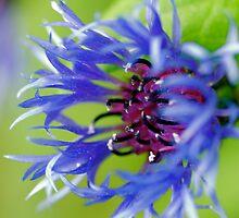 Kewl Blue by photodork