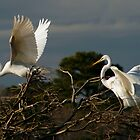 Egret Pair at Harris Neck by Jeff Holcombe