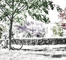 bike in dupont by tazman47