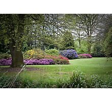 Azaleas in Springtime. Photographic Print