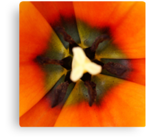 Hypnotize orange tulip Canvas Print