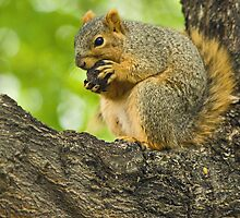 Tough Nut To Crack by Jan Cartwright