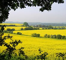 Fields of golden yellow by hjaynefoster