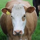How Now Brown Cow by Dave Godden