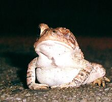 Toadwinked by cardiocentric