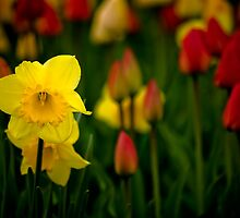 Colors of  a Spring Garden by Charles Plant