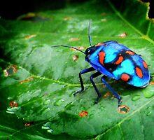 bugs bugs bugs (iii) by OTBphotography