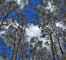 Sky view by purposemaker909