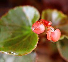 Little bleeding hearts. by debjyotinayak