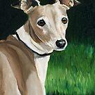 Italian Greyhound by Charlotte Yealey