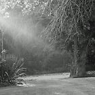 Sunrays on my Yard by Susan Blevins