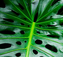 exotic leaf by domimage