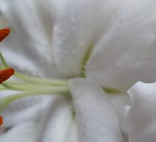 White Lily 2 by MagsWilliamson