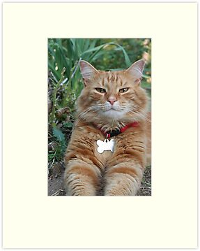 Opie My Orange Tabby Cat by DebbieCHayes