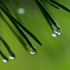 Needles and Drops by LeeAnne Emrick