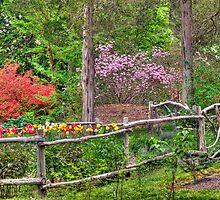 Tulip Garden by Monica M. Scanlan