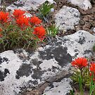 Blue Mountain Paintbrush by Kim Barton