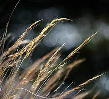 Whisper in the Wind by Vicki Pelham