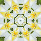 Frangipani Art_01 by Steve Holland