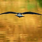 Full Flight by Lynne Morris