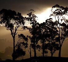 landscapes #201, stark by stickelsimages