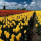 Out In the Tulip Fields by Brendan Schoon