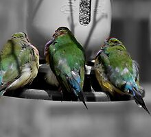 Three Birds in a Row.  by Evette Lisle