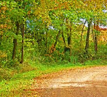 Bend in Croked Road - Mohican State Forest by Wes Shorter