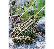 Life as a Frog Photographic Print