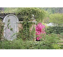 Pink Azalea Blooming by a Wall Photographic Print