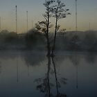 tree reflec at 4.52am by zacco