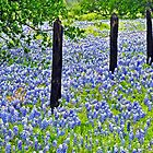 Bluebonnet Fence by Nick Conde-Dudding