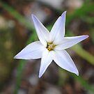 Star by NancyC