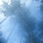 Ghost Gums in the mist. by Woomera