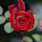 Dewdrops by Rochelle Buckley