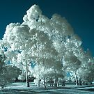'Blue' infrared gum trees by BigAndRed