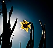 Spring Awakening by Diimiitrii