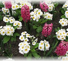 Hyacinths and Primroses Rectangular Vignette by BlueMoonRose