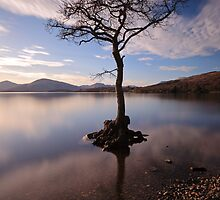 Millarochy tree by Photo Scotland