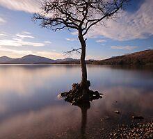 Millarochy tree by Grant Glendinning