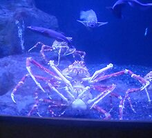 crabs in love  by bhavrisha