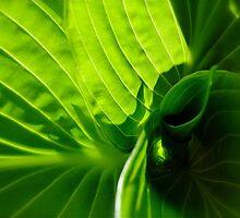 Green Swirl by Lynn Armstrong