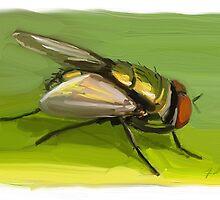 Fly by Andrew Faulkner