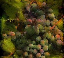 Oregon Grape by TeresaB